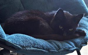 Feline arthritis affects plenty of older cats like this one