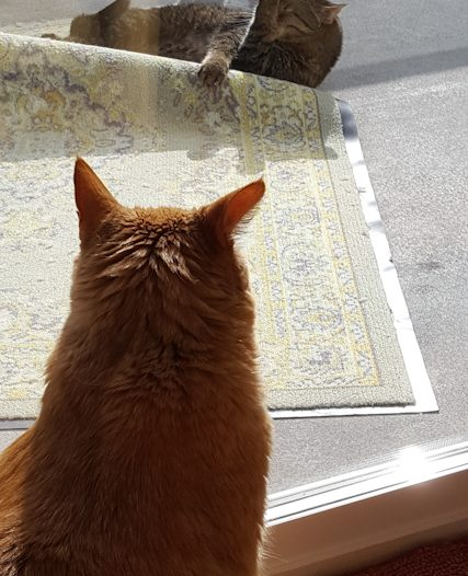 Cat Looking out the door at an outside feline
