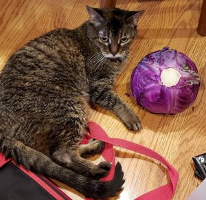 Adult cat with a cabbage and other vegetables