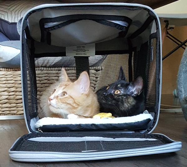 Two cats in a travel carrier now home from a car trip
