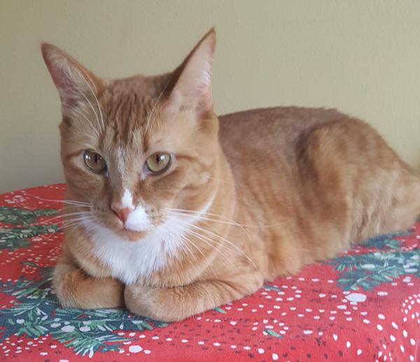 Cats Can Get Feline Ringworm