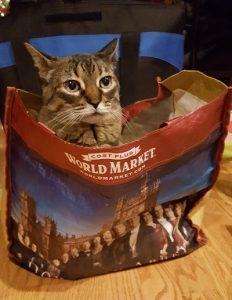 American Housecat sitting in shopping bag