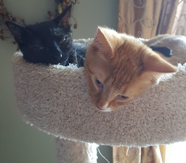 Two cats who make a lot of different feline sounds