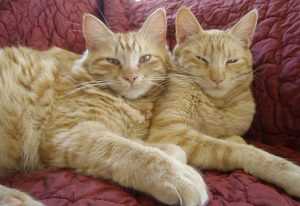 Twins have their feline rabies shots done